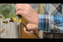Embedded thumbnail for Poncho The Parrot